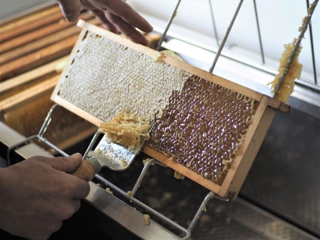 Wosk pszczeli - pozyskiwanie i zastosowanie w kosmetyce